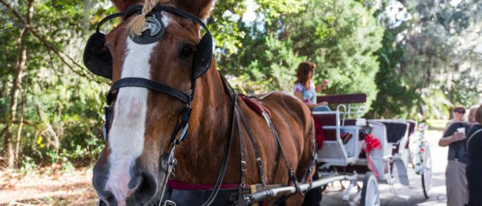 Horse Carriage Rides in Fernandina Beach, FL